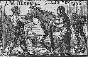 A press sketch showing one of the slaughterhouses in Whitechapel.