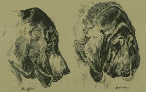 The bloodhounds used in the trials.